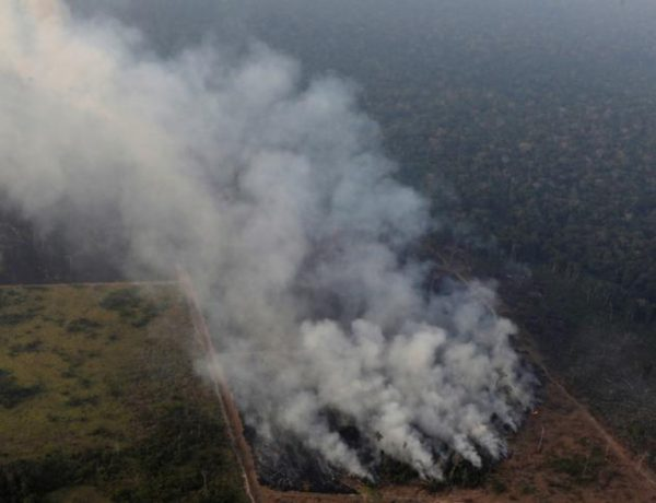 Care este adevarul din spatele flacarilor care au mistuit Plamanii Lumii, Amazon - partea I