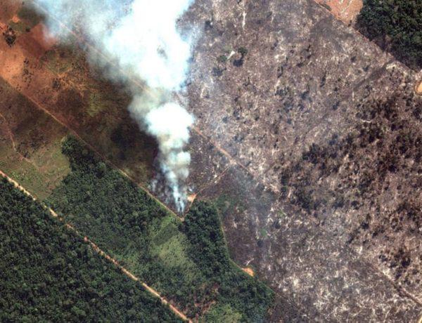 Se pare ca incendiile din Amazon sunt produse intentionat